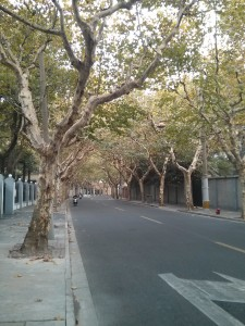 No autumn leaves on Hunan Lu